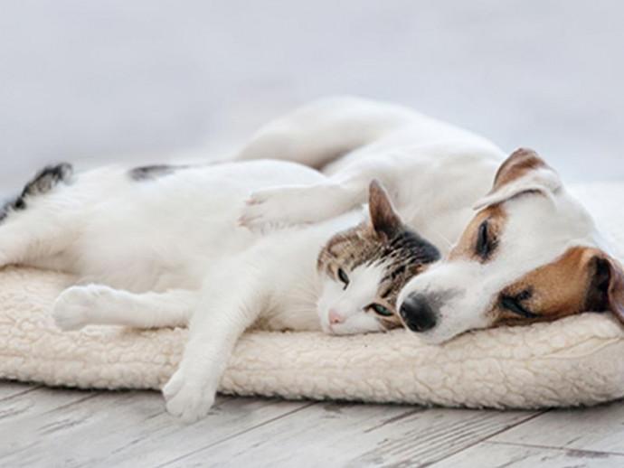 今日は「いい家族の日」愛犬・愛猫と幸せに過ごすために…