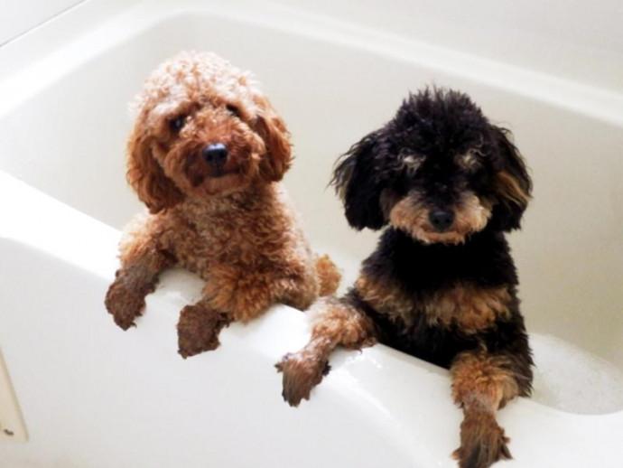 今日は「いい風呂の日」愛犬、愛猫はお風呂が好き?お水が苦手な子もこれでピカピカ!