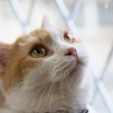 猫はどうして脱走するの?脱走の理由と見つけた時の注意点