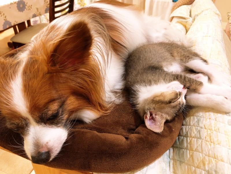 年末年始は犬や猫の誤飲に注意!気を付けたいポイントをご紹介