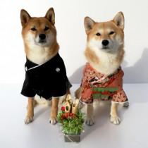 2021年!愛犬・愛猫の初写真は「わんにゃ投稿」に投稿しよう!