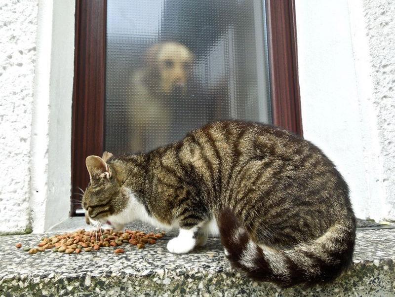 犬や猫が中毒を起こす危険性がある「8つ」の物