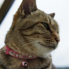猫の不思議な行動にみられる習性を理解しよう