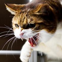 猫は動物病院が嫌い?!嫌がる猫を動物病院に連れていくポイントとは