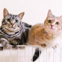 「2月22日は猫の日」猫との暮らしに感謝 愛猫と幸せな毎日を過ごそう