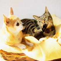 愛犬、愛猫の瞳の健康を守ろう!犬、猫の目のこと特集