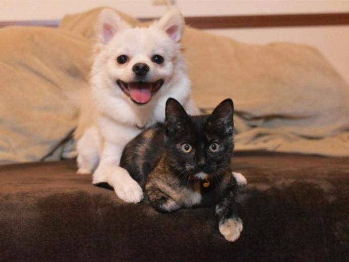 愛犬、愛猫のトイレ事情は管理できていますか?