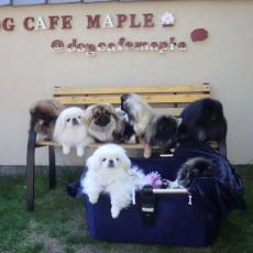 愛犬家が集う注目のドックカフェ!奈良県北葛城郡「DogCafe MAPLE(ドッグカフェ メイプル)」