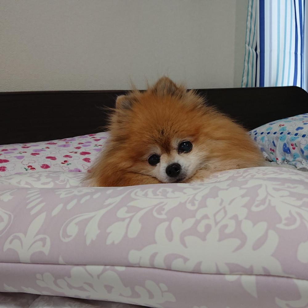 ひんやり枕でお昼寝だよ🎐