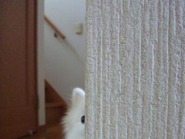 どんなにじょーずに 隠れても・・・♪ 可愛いお目々が見えてるよ♪