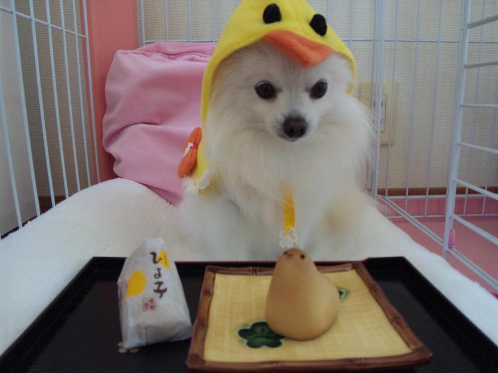 和菓子 ひよ子 と 一緒に ヒヨコになってみた めるもちゃん🐥
