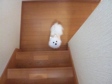 2階にいる私を階段の真下で しょっちゅう呼びに来る困ったちゃん(>_<)