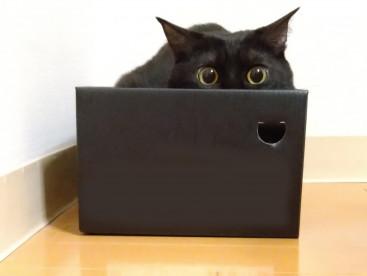 箱が大好きなキキちゃん🐈ぴったりだね~