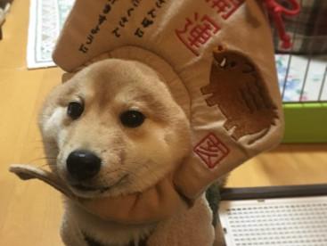 豆太郎です。明けましておめでとうございます!今年はおさんぽたくさんいけますように〜、、!