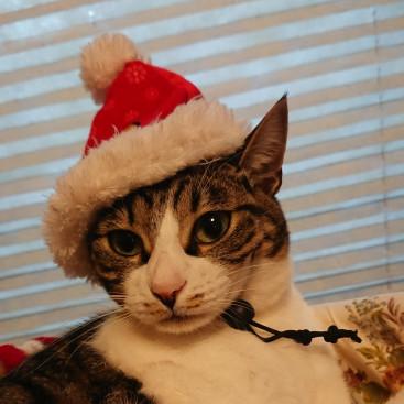 Merry Christmas★