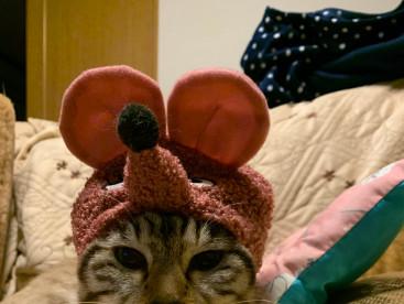 😺と🐭は相性悪い⁉️ だけど華はこの帽子が好きよ💕💕