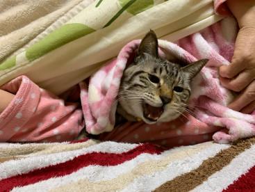 ママ、起きないで‼️ 華、まだねむい😺