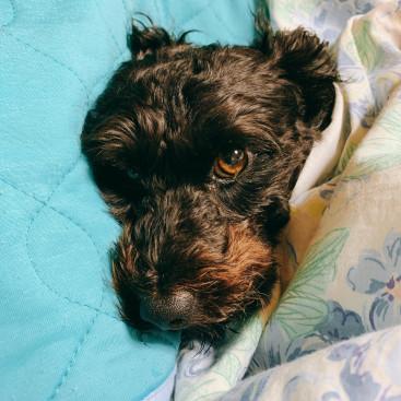 毎朝おじいちゃんの布団の中に潜り込んで寝ています笑