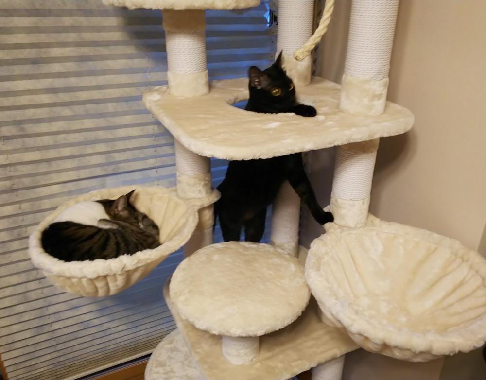 新しいキャットタワーでくつろぐミーコと興味津々なキキ🎶