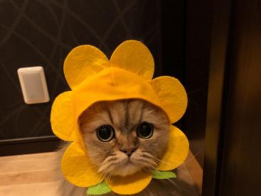 お花 が 咲いたパピ🐱