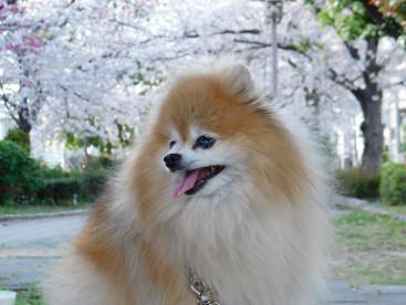 🌸桜はすごくキレイだったよ🍀🍀