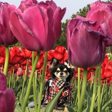 もうすっかり春ですね おやゆび姫風に撮影してみました 見えるかな?(*´艸`*)♡
