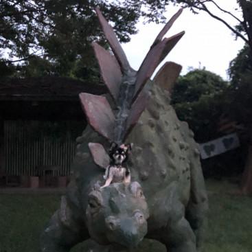 恐竜さんと仲良し❤️