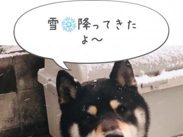 犬〜は喜び庭駆け回り🎶だね💕