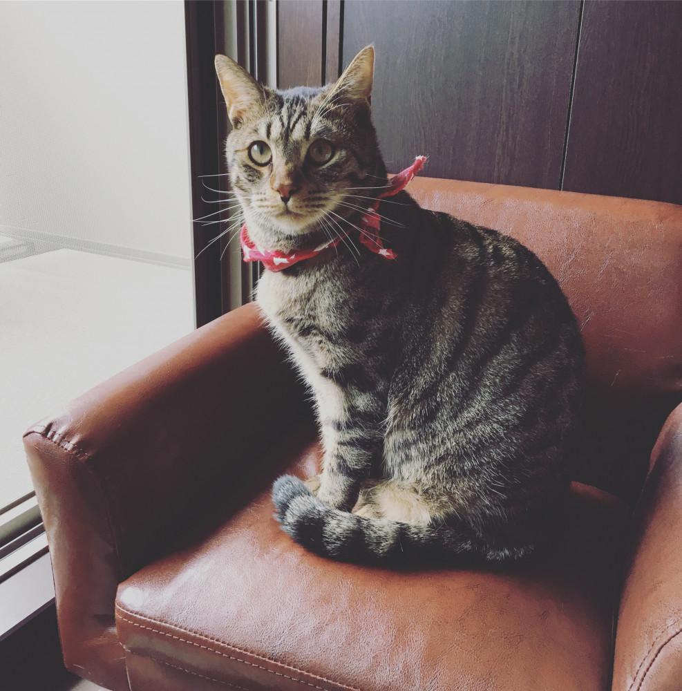 ソファーにお座る胡椒さん