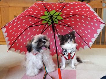 大好きなまるちゃんと相合い傘です💕