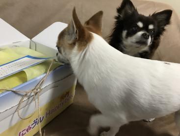 ハッピーBOX届いたよー! クンクン何が入ってるかな⁇