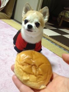 ぼく🐶。知らないふりしているけど あんパン・大好き❤なんだ ほんの少しちょうだい🐶🐶🐶