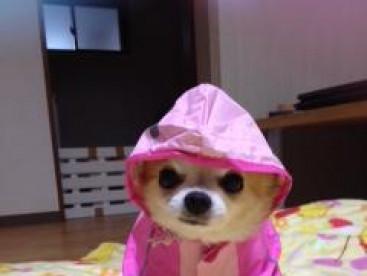 赤ちゃんみたいにハイハイ🐶 雨ガッパ着て散歩に行くんだよ。 そうだよね。ママ💕❤️💕