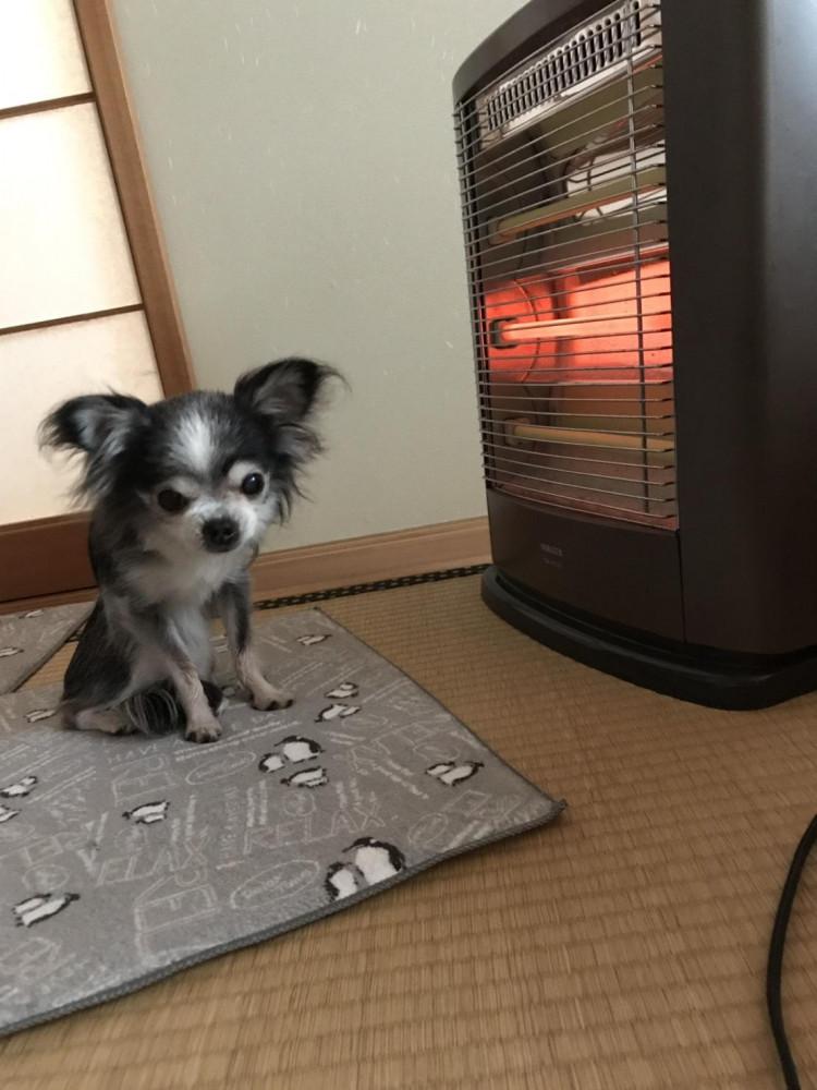 気持ちが良いネ〜💕💕 ママもおいでよ。暖かい🐶