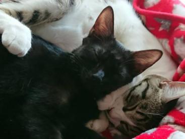 ミーコとキキみてるだけで幸せな瞬間♪
