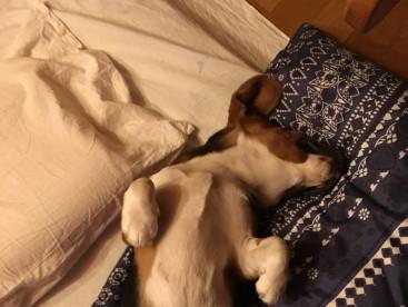 最近のジョンは寝相が本当に悪いです。無防備この上ない(笑)