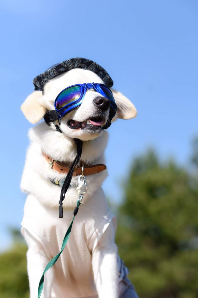 お散歩日和。 日差しまぶしいからサングラスでかっこよく決めてみたよ。