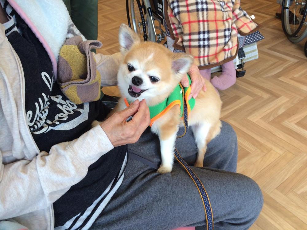 ぼく🐾老人ホームで1日セラピー犬として働いたんだよ。とても喜んでくれたよ💕💕