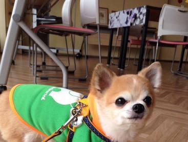 ムック、初セラピー犬として1日体験しまーす🐾🐾