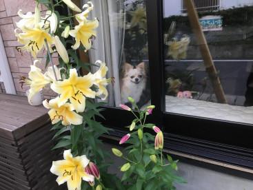 お外を見るのが大好き!