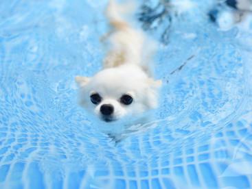 夏の風物詩!プールで泳いできたよ♪
