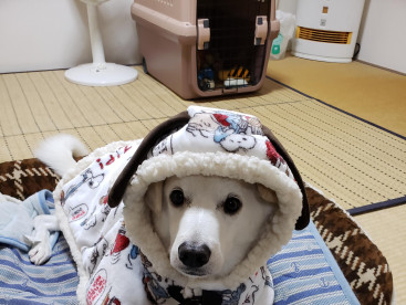 スヌーピーの着る毛布ぬくぬくだよ~。