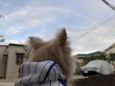 毎日胸きゅん 夕方に虹が見れました。 分かってるのかな? じっと見ていました