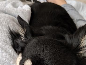 ママの足の間が一番落ち着いて、気持ち良いね😃直ぐ寝れちゃうよ😌