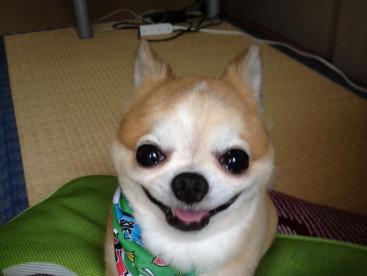 ムックの笑顔、最高だね〜❤️