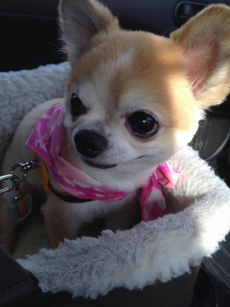 ねぇ〜。ママ、今日は何処に行くの? 僕、楽しみだなぁ〜🐶🐶❤️