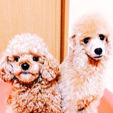 左:兄あずき2歳。 右:弟もなか7カ月。 兄の方が小さい・・・Σ(*゚□゚*)