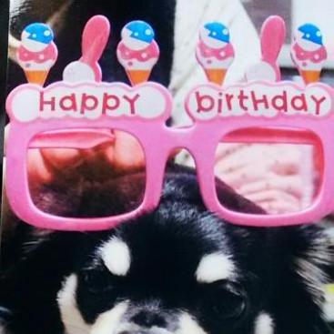 元誕生日おめでとう♥16日で4歳になったね。元滅茶苦茶可愛くて大好きだよ♥