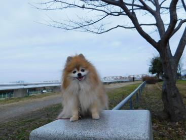 寒い日だから お昼の散歩になります🐾🐾