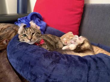 お姉ちゃんのお腹で眠る弟ふたり。